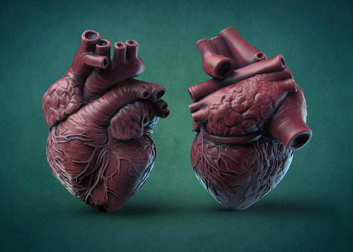 وظیفه سیستم کنترل ضربان قلب